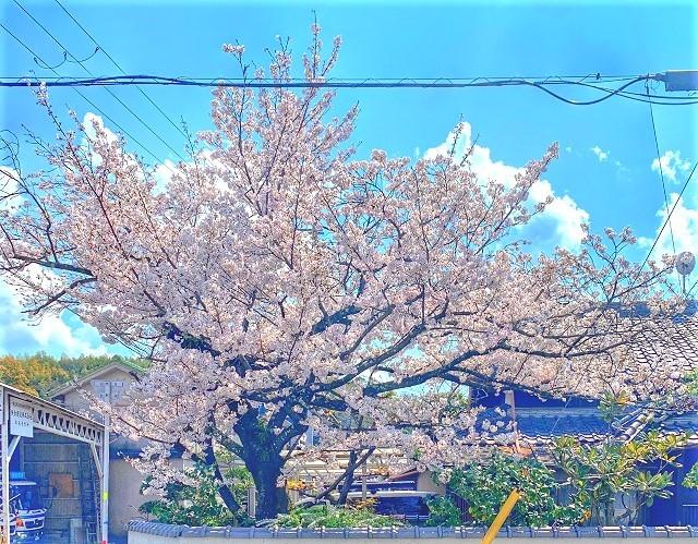 IMG_7995-photo-full.jpg